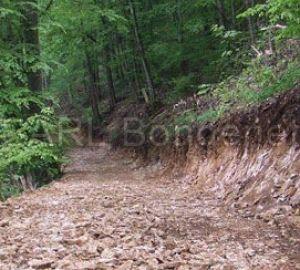 chemin_forestier